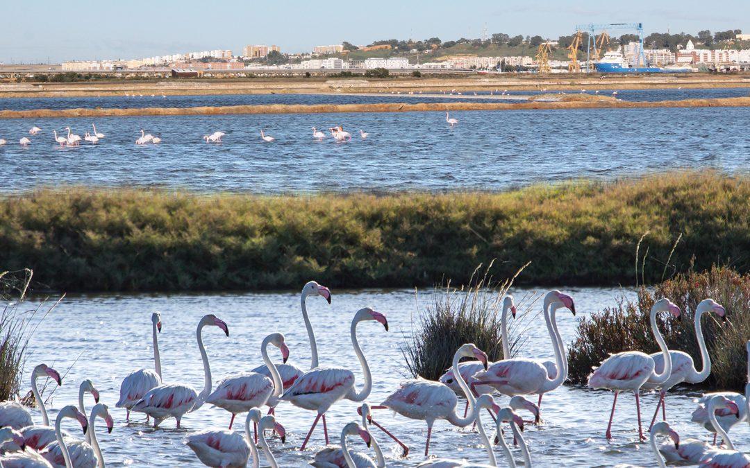 El Puerto de Huelva avanza en su contribución a los Objetivos de Desarrollo Sostenible en concordancia con su Plan Estratégico